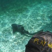 2018 07 Belize requin