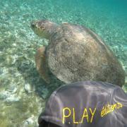 2018 07 Belize tortue